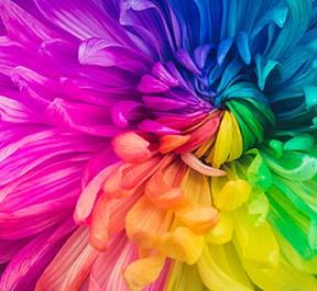 Como as nossas emoções afetam a forma que vemos as cores?
